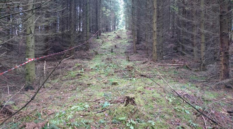 ForestGump17